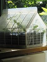 Kweekkasje Camellia Piet Design