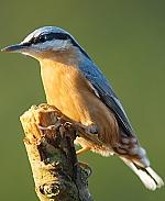 Boomklever Birdmobile 1:1