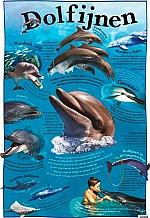 Educatieve poster Dolfijnen