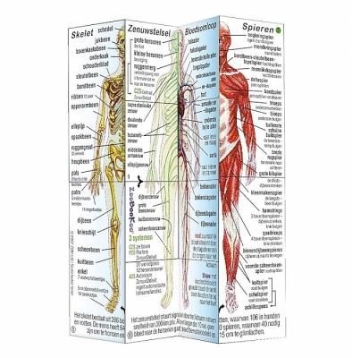 Menselijk lichaam ZooBooKoo vanaf groep 6